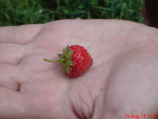 Real berries, no 3.14 :)