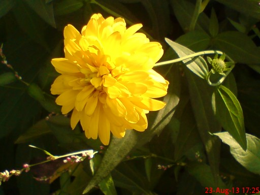 image of yellow flower